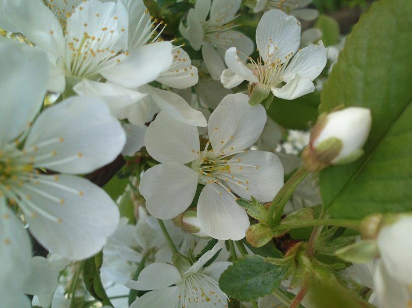 Тамбовчане могут сами выбрать растение – символ нашей области