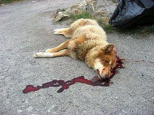На тамбовском ипподроме на глазах посетителей убили 4-х собак