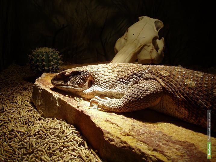 Тамбовчане подарили зоопарку ТГУ варана