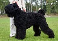 Путин подарил Уго Чавесу русскую собаку