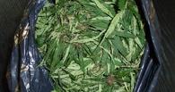 В Тамбове задержали молодого человека с 100 граммами марихуаны
