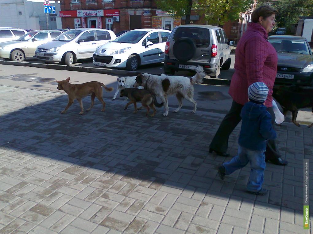 Бродячие псы покусали четырех тамбовчан
