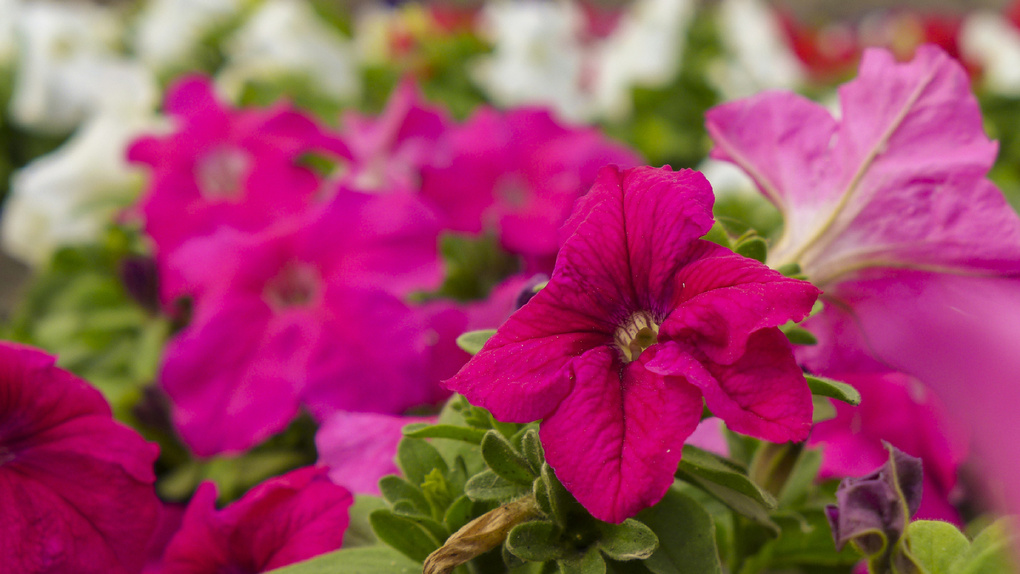 В Тамбове появятся пальмы и высадили цветы: работы по благоустройству идут полным ходом