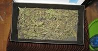 Житель Жердевки хранил в своём доме наркотики