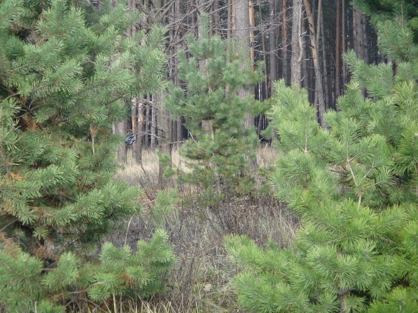 Мичуринск «окутала» охраняемая природная зона