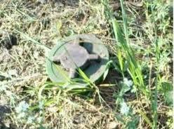 Тамбовчане нашли противопехотную мину