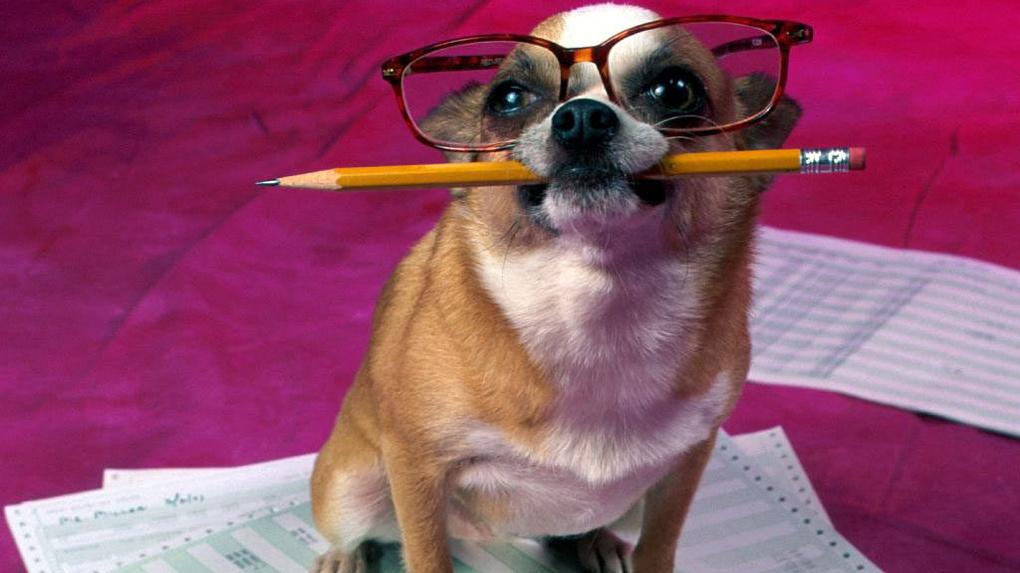 Понимают всё! Рейтинг самых умных пород собак в мире