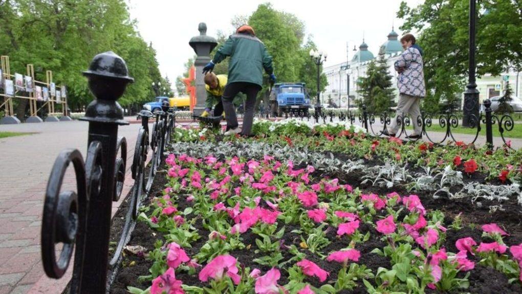 2,5 миллиона цветов украсят улицы Тамбова