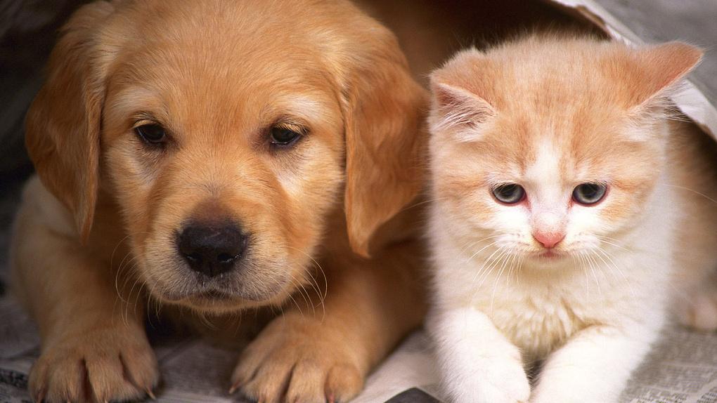 Кошки или собаки? Стало известно, какого питомца хотят жители Тамбова