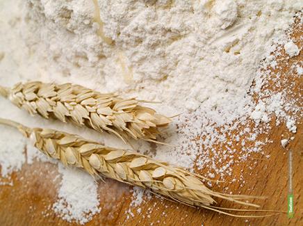 Тамбовское зерно пустят на крахмал