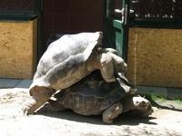Черепахи решили развестись после 115 лет совместной жизни