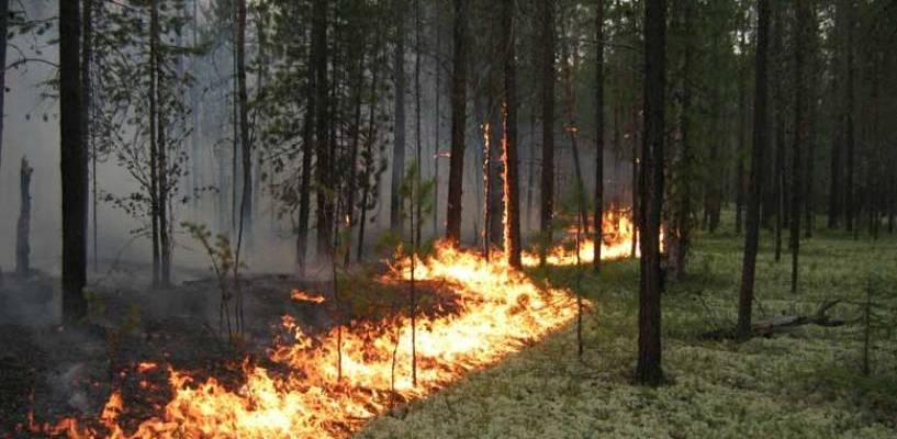 С начала мая произошло 4 возгорания в тамбовских лесах