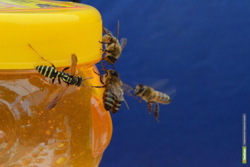 Французы будут консервировать пчёл по-тамбовски