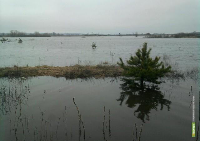 Уровень воды в тамбовских водоёмах местами снизился