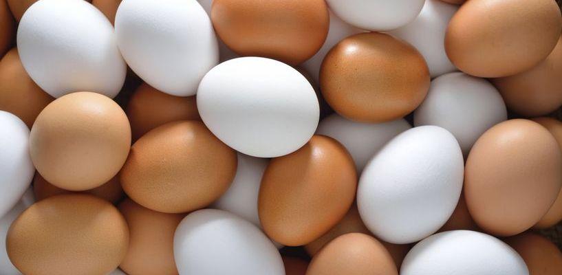 Парад «цыплят» и огромная яичница: стало известно, как пройдет фестиваль Яйца