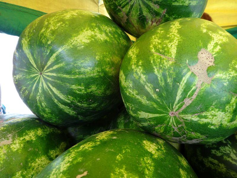 В Жердевском районе украли 300 килограммов арбузов