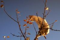 В Нью-Йорке полицейский, спасая кота, застрял на дереве