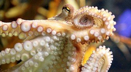 Осьминог Пауль признан самым необычным животным года