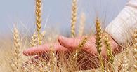 Тамбовские сельхозпроизводители получили господдержку