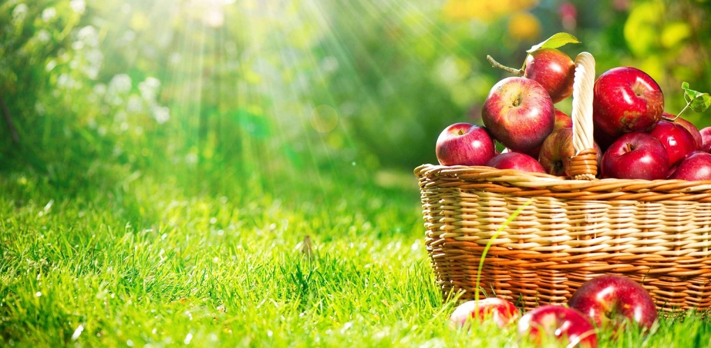 В прошлом году в регионе заложили более 600 гектаров плодовых и ягодных садов