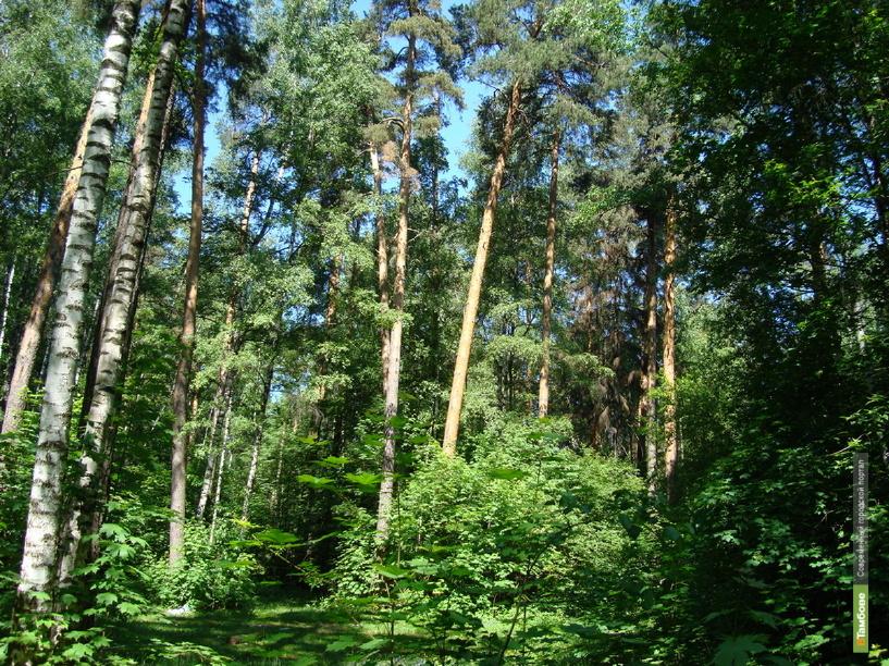 С начала года на Тамбовщине сгорело 2,65 гектара леса