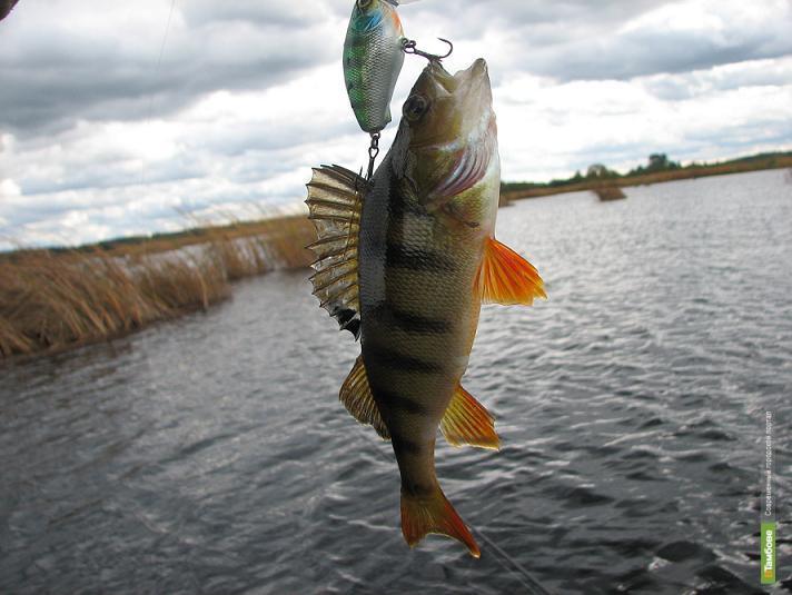 На Набережной Тамбова пройдет чемпионат по рыбной ловле