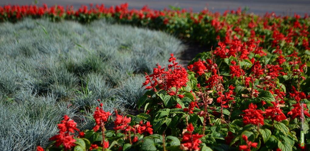 Мичуринск этой весной украсят более 100 тысяч цветов