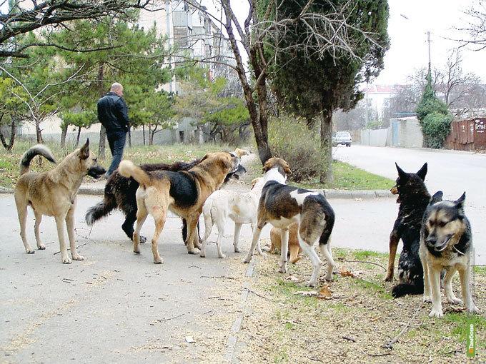 Тамбовские прокуроры заступились за бродячих собак