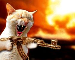 Тамбовские спасатели обезвредили «кота-террориста»