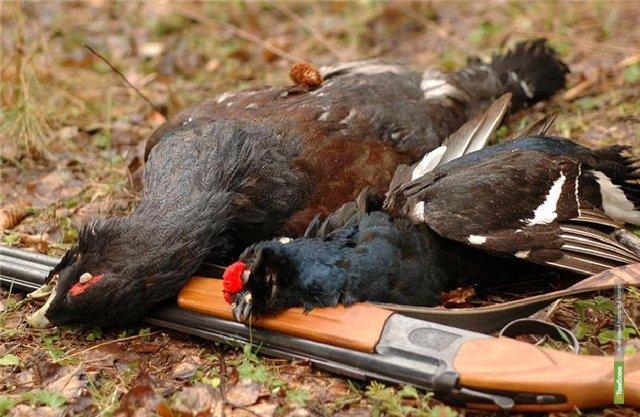 В тамбовских лесах ввели табу на отстрел дичи