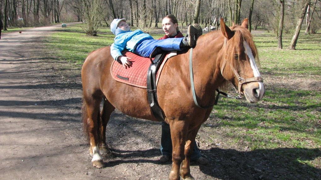 На Тамбовщине детям с ограниченными возможностями помогут лошади