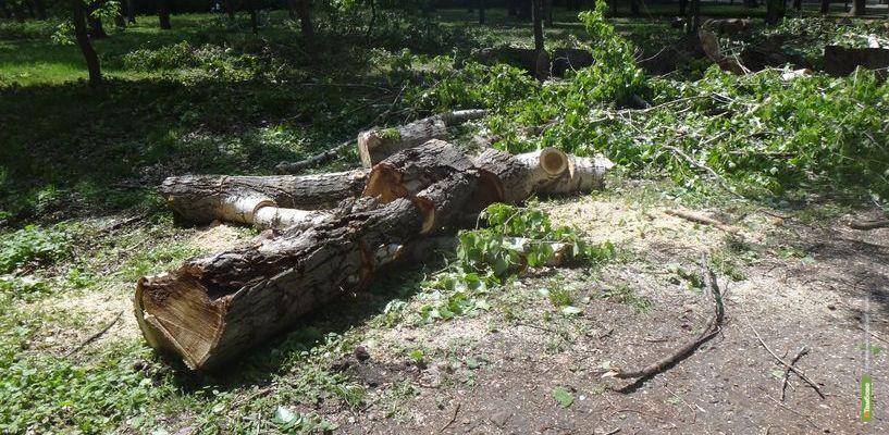 Снова стройка? Тамбовчане взволнованы рубкой деревьев в Лётке