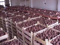 Половина Центральной России будет питаться тамбовскими овощами