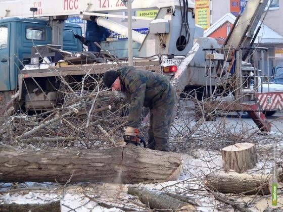Опиловка старых деревьев обойдется Тамбову в 3 миллиона рублей