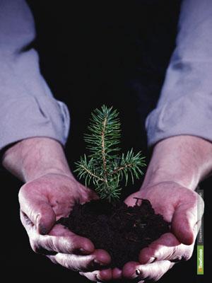 На Тамбовщине успешно восстанавливают леса
