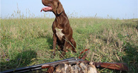 В Тамбовской области начинается сезон охоты на пернатую дичь