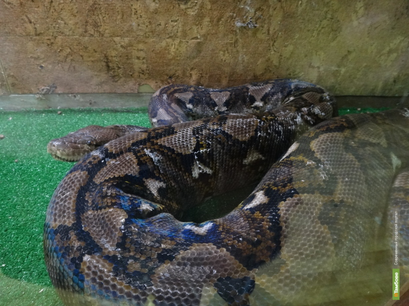 В тамбовском зоосаде выбрали самую привлекательную змею