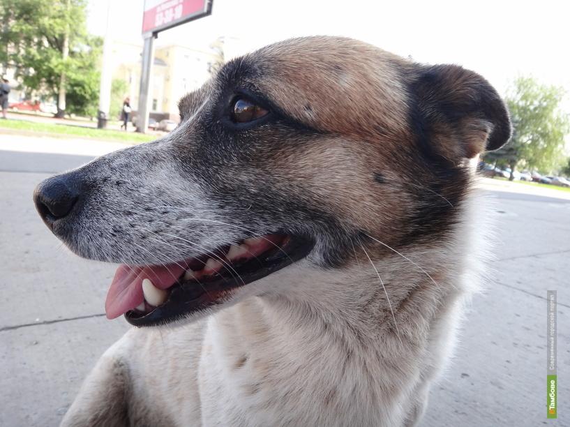 За год на Тамбовщине уничтожили полторы тысячи собак