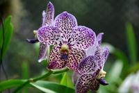 На Шри-Ланке русскую пару осудили за сбор орхидей