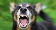 В области отмечается увеличение случаев бешенства у животных
