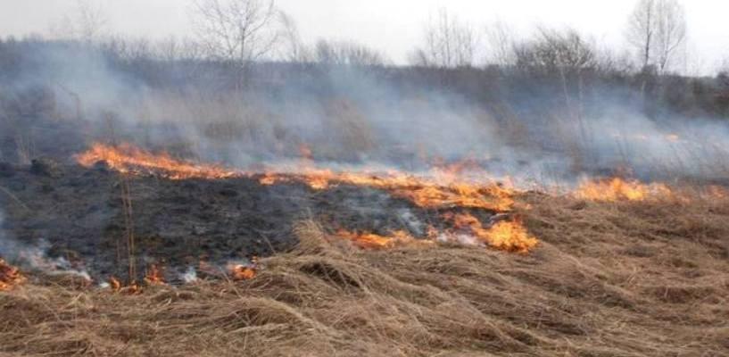 Тамбовчане заплатили 60 тысяч рублей за выжигание сухой травы