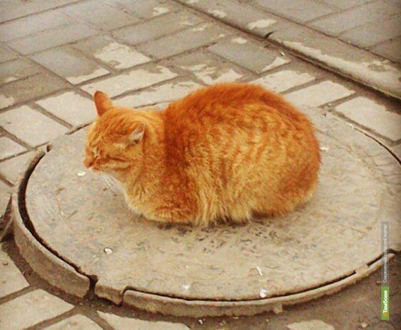 В Тамбове планируют провести перепись бездомных животных