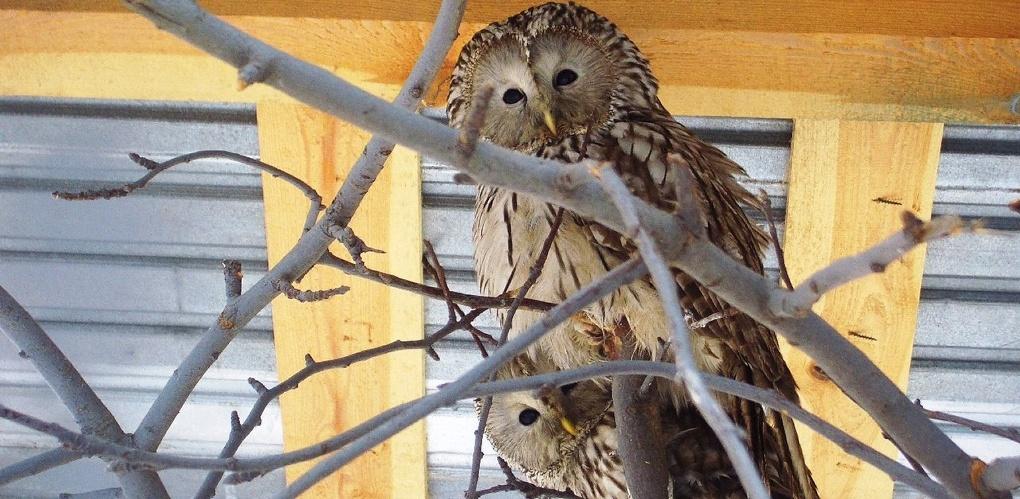 Для пернатых хищников в Державинском зоопарке построили новый вольер