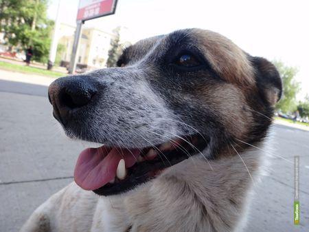 Тамбовчан заставят убирать за своими собаками