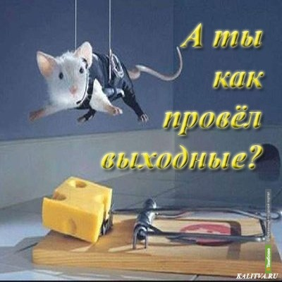 Выходные с ВТамбове.ру: сантехник в саркофаге