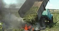 Тамбовские наркополицейские перепахали поле конопли