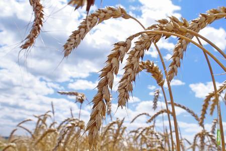 Инвесторы вложат более 2 млд. рублей в тамбовское зернохранилище
