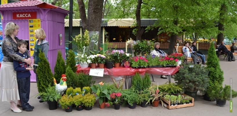 На майские праздники для тамбовчан проведут Фестиваль цветов
