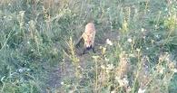 За полгода в регионе дикие животные покусали почти 1,5 тысячи тамбовчан
