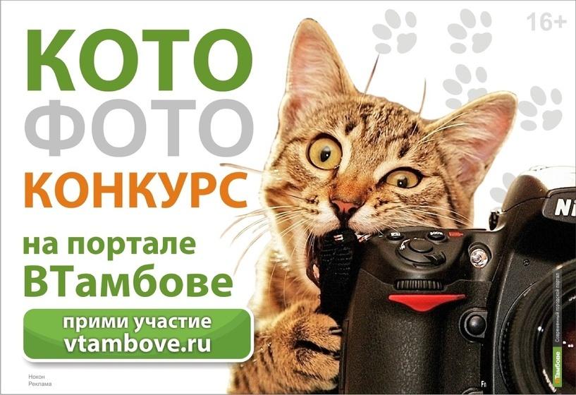 ВТамбове продолжает «перепись» тамбовских котов
